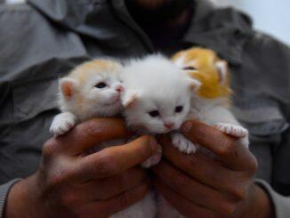 katte-forsikring-koebstaederne